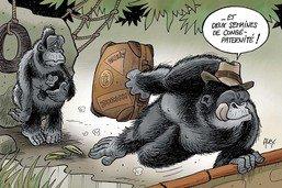 Naissance d'un bébé gorille au zoo de Bâle