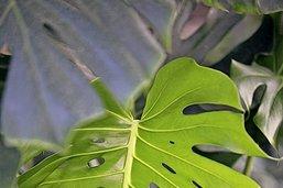 Plantes vertes pour débutants
