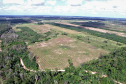 Le Papiliorama crée un couloir biologique au Belize