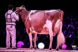 Zaia devient grande championne à Swiss Expo