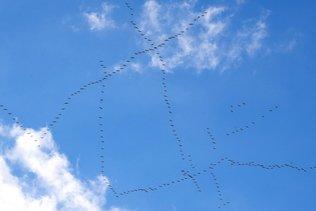 Des milliers d'oiseaux tués par les vents violents en Grèce