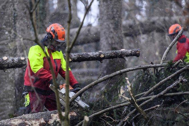 La filière du bois dans l'incertitude