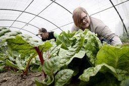 Un jardin potager à but social