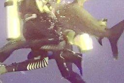 Staviacoise croquée par un requin