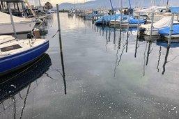Pollution aux hydrocarbures dans le port de Portalban