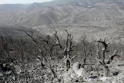 Incendie sur la Côte d'Azur: vent retombé, situation encore tendue
